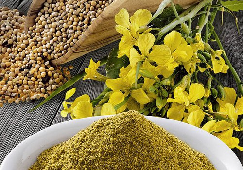 Семена горчицы сарептской сорт Ника